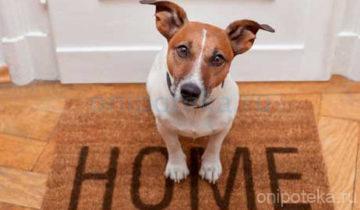 Как снять жилье с домашними животными: советы экспертов